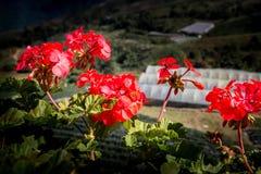 Rote und orange Blütenstaubblume auf dem Blumenstrauß lebendig lizenzfreies stockbild