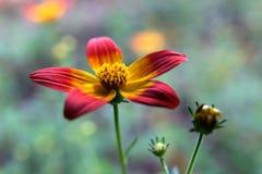 Rote und orange Blume Stockbild