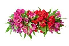 Rote und rosa Alstroemeriablumen verzweigen sich auf weißer Hintergrund lokalisierten Abschluss oben lizenzfreie stockfotos