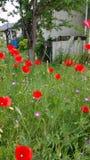 Rote und rosa wilde Blumen Stockfotos