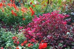 Rote und rosafarbene Blumen lizenzfreies stockbild