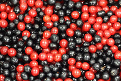 Rote und schwarze Beeren Lizenzfreies Stockbild