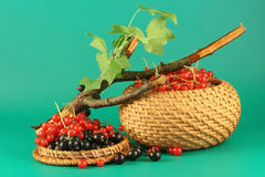 Rote und Schwarze Johannisbeere Stockfotografie