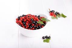Rote und Schwarze Johannisbeeren in einer weißen Schüssel lizenzfreies stockfoto