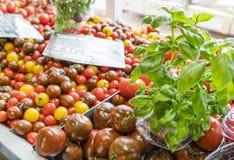 Rote und schwarze Tomaten mit Basilikum lizenzfreies stockfoto