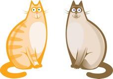 Rote und siamesische Katzen Stockbild