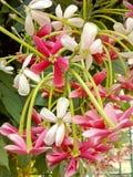 Rote und weiße Blumen lizenzfreies stockfoto