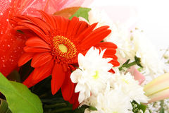 Rote und weiße Blumen Lizenzfreie Stockbilder