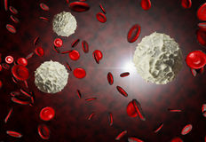 Rote und weiße Blutzellen Stockbild