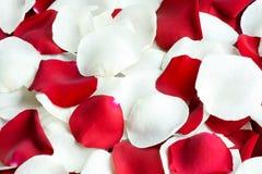 Rote und weiße rosafarbene Blumenblätter Stockfoto