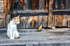 Rote und weiße Katze mit kleinen Kätzchen gegen eine hölzerne Wand der alten hölzernen Hütte in einer Landschaft Katze und zwei K Stockbild