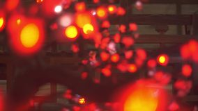 Rote unscharfe Lichter der Zusammenfassung von synthetischem Kirschblüte-Baum mit Dekorationen der japanischen Art stock footage