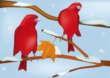 Rote Vögel im Winter Stockbilder