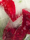 Rote vertikale organische Abstraktion Stockfoto