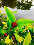 Rote wachsende Blume stockbild