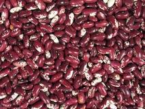 Rote weiße Bohnen stockfotos