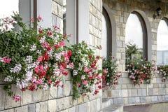 Rote, weiße und rosa Blumen Stockbild