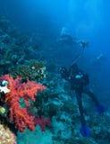 Rote weiche Koralle Lizenzfreie Stockfotografie