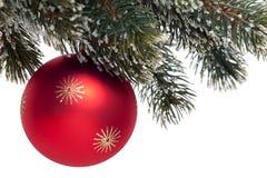 Rote Weihnachtsbaumkugel auf Tannenzweig Lizenzfreies Stockfoto