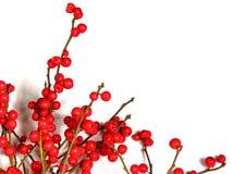 Rote Weihnachtsbeeren auf Weiß 1 lizenzfreie stockfotos