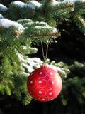Rote Weihnachtskugel auf Tannenbaum Lizenzfreie Stockbilder