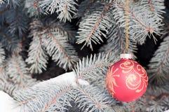 Rote Weihnachtskugel mit Goldmuster auf blauer Fichte Stockfoto