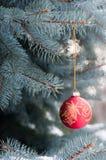 Rote Weihnachtskugel mit Goldmuster auf blauer Fichte Lizenzfreie Stockbilder