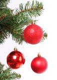 Rote Weihnachtskugeln auf Weihnachtsbaumzweig Lizenzfreie Stockfotos