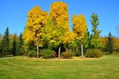 Rote Willow Trail, St. Albert, West-Kanada Lizenzfreie Stockfotos