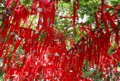Rote Zeilen des Taishan Baums stockbild