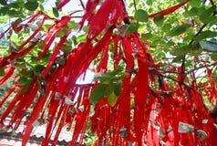 Rote Zeilen des Taishan Baums Stockfotos