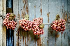 Rote Zwiebel, die an der Wand des Hauses hängt: Nahaufnahme lizenzfreie stockbilder