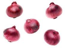 Rote Zwiebeln auf weißem Hintergrund Stockfotos