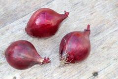 Rote Zwiebeln an einem verwitterten hölzernen Hintergrund Lizenzfreie Stockfotografie
