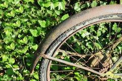 Rotella arrugginita di una bici contro l'edera fotografia stock