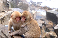 Roter Affe am Schneeaffepark im Japan Stockfotos