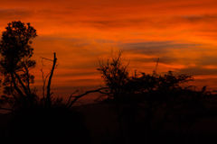 Roter afrikanischer Morgensonnenaufgang Lizenzfreies Stockfoto