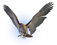 Roter angebundener Falke - enthält Ausschnittspfad vektor abbildung