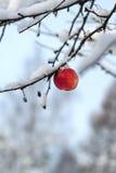 Roter Apfel auf dem weißen Schnee Lizenzfreie Stockfotografie