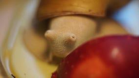 Roter Apfel auf Spiegel und drei Schnecken stock video