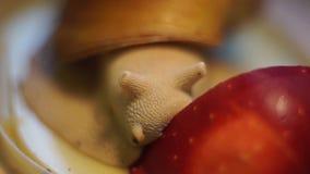 Roter Apfel auf Spiegel und drei Schnecken stock video footage