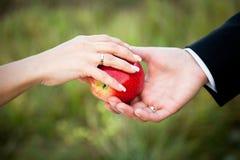 Roter Apfel in den Händen der Braut und des Bräutigams mit Goldeheringen Stockfotos