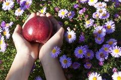 Roter Apfel in den Kinderhänden auf Blumenhintergrund Stockfoto