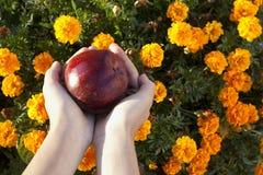 Roter Apfel in den Kinderhänden auf Blumenhintergrund Stockbilder