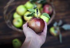 Roter Apfel in der Hand und der Korb mit Äpfeln auf dem Holztisch Stockbilder