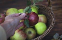 Roter Apfel in der Hand und der Korb mit Äpfeln auf dem Holztisch Lizenzfreies Stockfoto