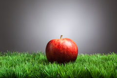 Roter Apfel im Gras, grauer Hintergrund Lizenzfreies Stockbild