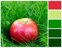 Roter Apfel im Gras mit Palettenfarbmustern Lizenzfreie Stockfotos