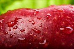 Roter Apfel mit Tropfen stockfotos