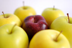 Roter Apfel umgeben Stockfotografie